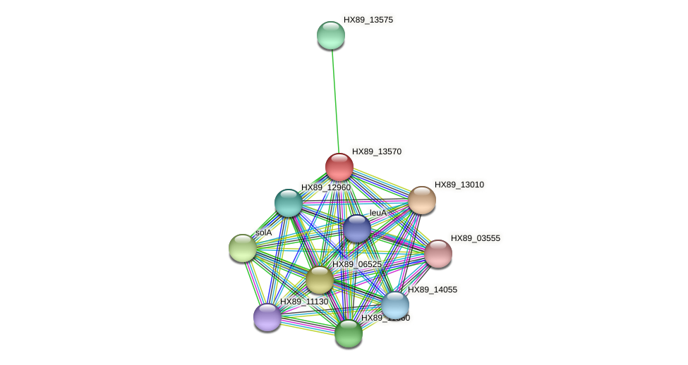 HX89_13570 protein (Dermacoccus nishinomiyaensis) - STRING interaction network