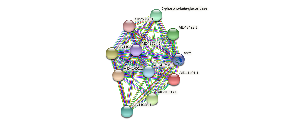 AID41491.1 protein (Staphylococcus xylosus) - STRING interaction network