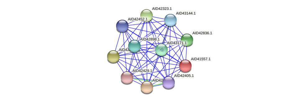 AID41557.1 protein (Staphylococcus xylosus) - STRING interaction network