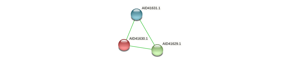 AID41630.1 protein (Staphylococcus xylosus) - STRING interaction network