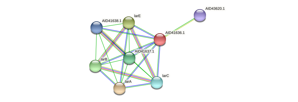 AID41636.1 protein (Staphylococcus xylosus) - STRING interaction network
