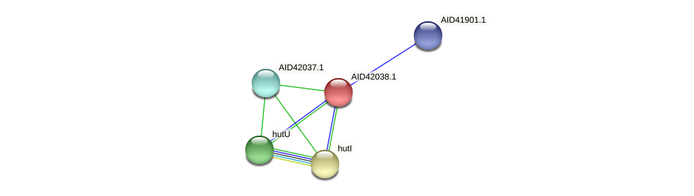 AID42038.1 protein (Staphylococcus xylosus) - STRING interaction network