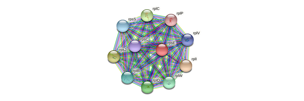 rpsE protein (Staphylococcus xylosus) - STRING interaction network