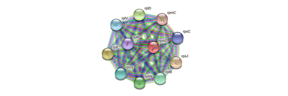 rpmD protein (Staphylococcus xylosus) - STRING interaction network