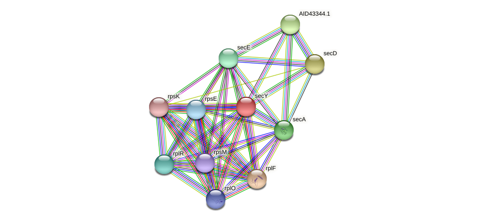 secY protein (Staphylococcus xylosus) - STRING interaction network