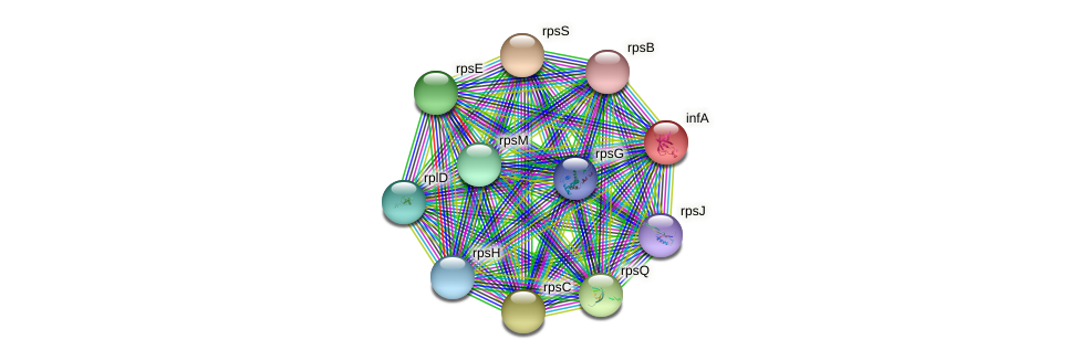 infA protein (Staphylococcus xylosus) - STRING interaction network