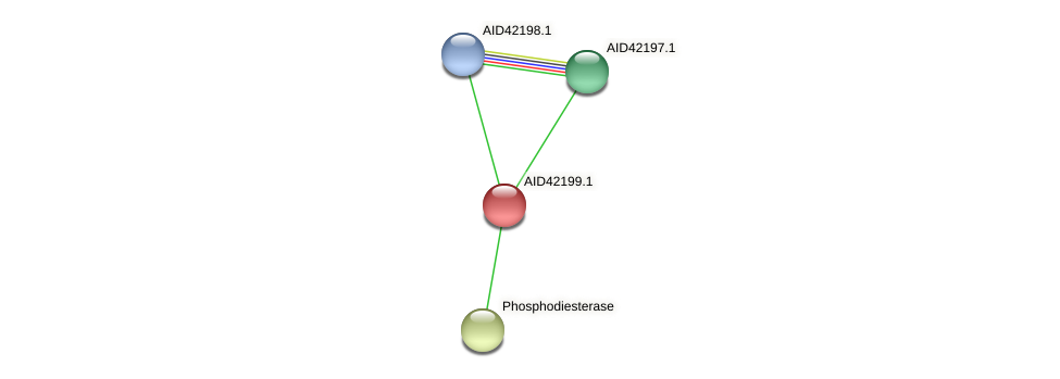 AID42199.1 protein (Staphylococcus xylosus) - STRING interaction network