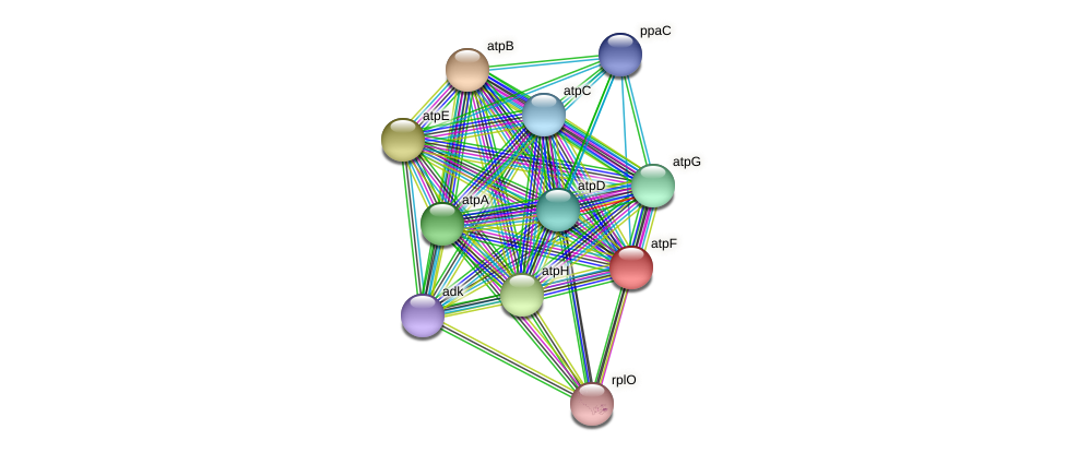 atpF protein (Staphylococcus xylosus) - STRING interaction network