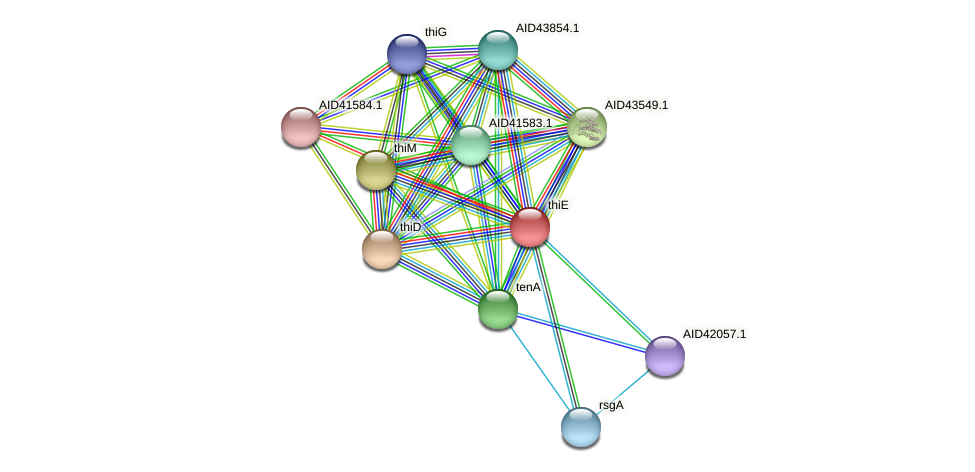 thiE protein (Staphylococcus xylosus) - STRING interaction network
