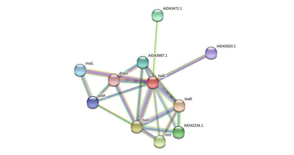 AID42286.1 protein (Staphylococcus xylosus) - STRING interaction network