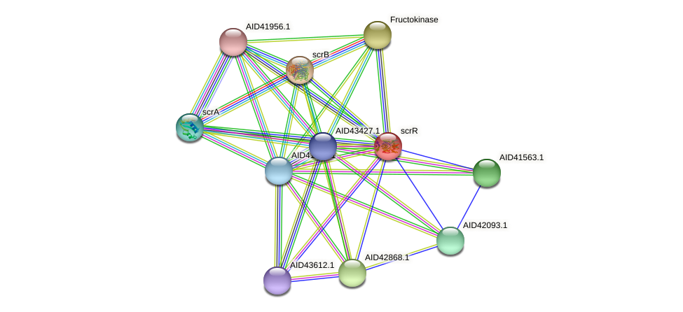 scrR protein (Staphylococcus xylosus) - STRING interaction network