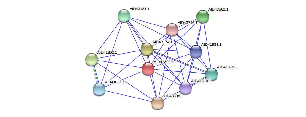 AID42309.1 protein (Staphylococcus xylosus) - STRING interaction network