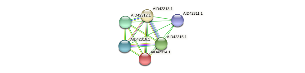 AID42314.1 protein (Staphylococcus xylosus) - STRING interaction network