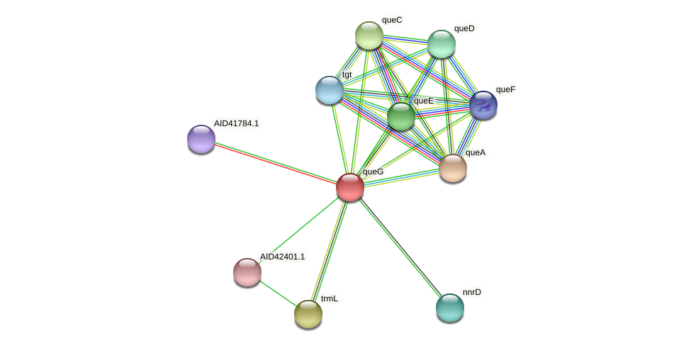 AID42403.1 protein (Staphylococcus xylosus) - STRING interaction network