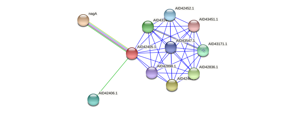 AID42405.1 protein (Staphylococcus xylosus) - STRING interaction network