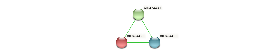 AID42442.1 protein (Staphylococcus xylosus) - STRING interaction network