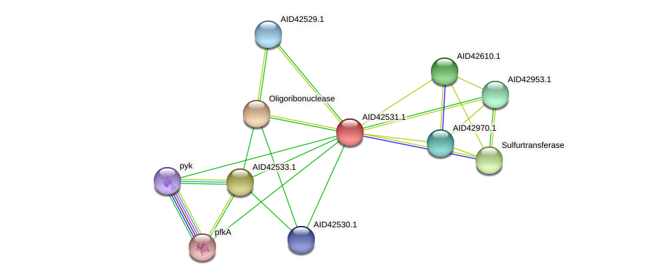 AID42531.1 protein (Staphylococcus xylosus) - STRING interaction network