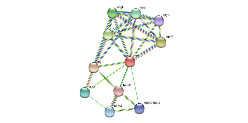 engB protein (Staphylococcus xylosus) - STRING interaction network