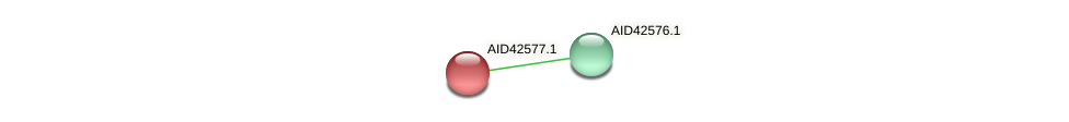 AID42577.1 protein (Staphylococcus xylosus) - STRING interaction network