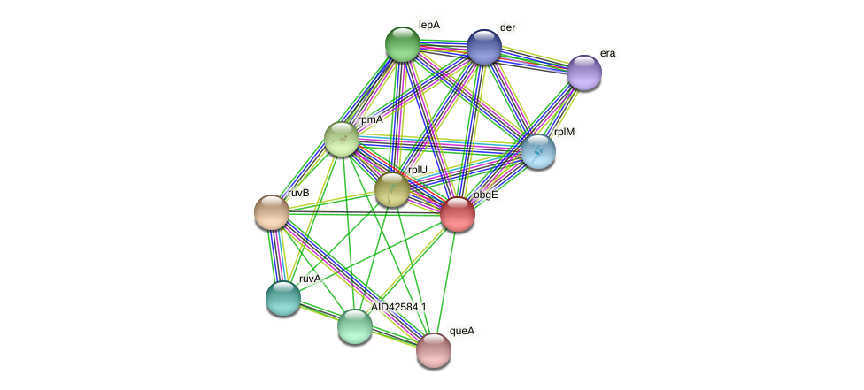 obg protein (Staphylococcus xylosus) - STRING interaction network