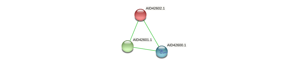 AID42602.1 protein (Staphylococcus xylosus) - STRING interaction network