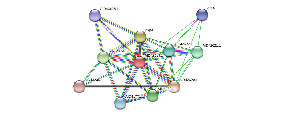 AID42619.1 protein (Staphylococcus xylosus) - STRING interaction network
