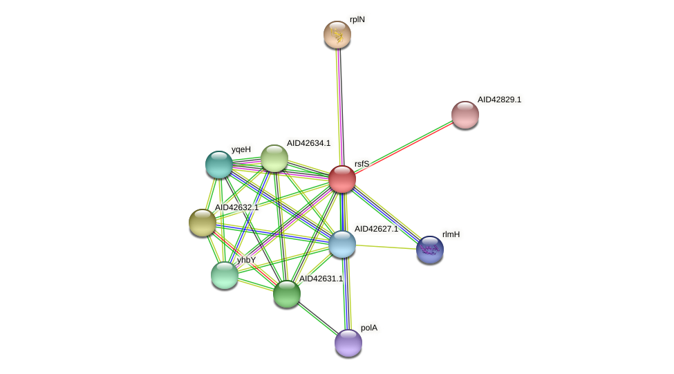rsfS protein (Staphylococcus xylosus) - STRING interaction network