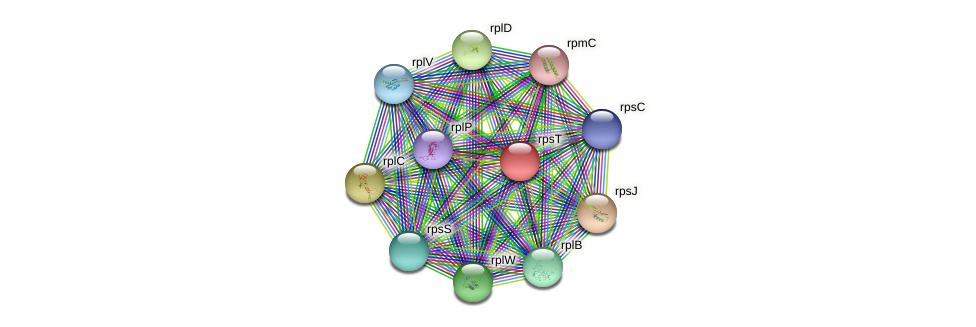 rpsT protein (Staphylococcus xylosus) - STRING interaction network