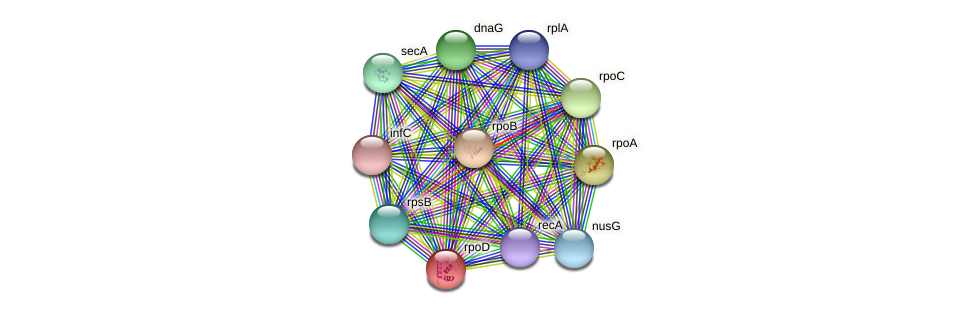 sigA protein (Staphylococcus xylosus) - STRING interaction network