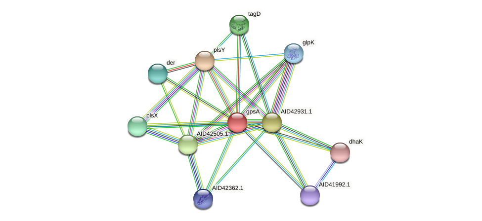 gpsA protein (Staphylococcus xylosus) - STRING interaction network