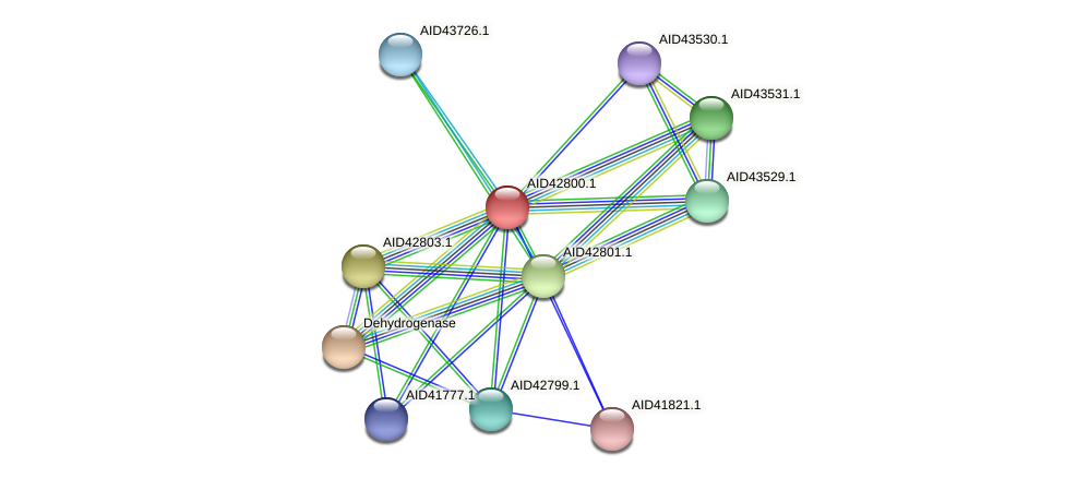 AID42800.1 protein (Staphylococcus xylosus) - STRING interaction network