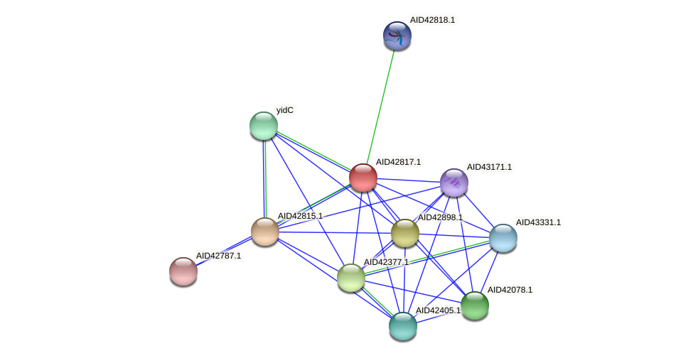 AID42817.1 protein (Staphylococcus xylosus) - STRING interaction network
