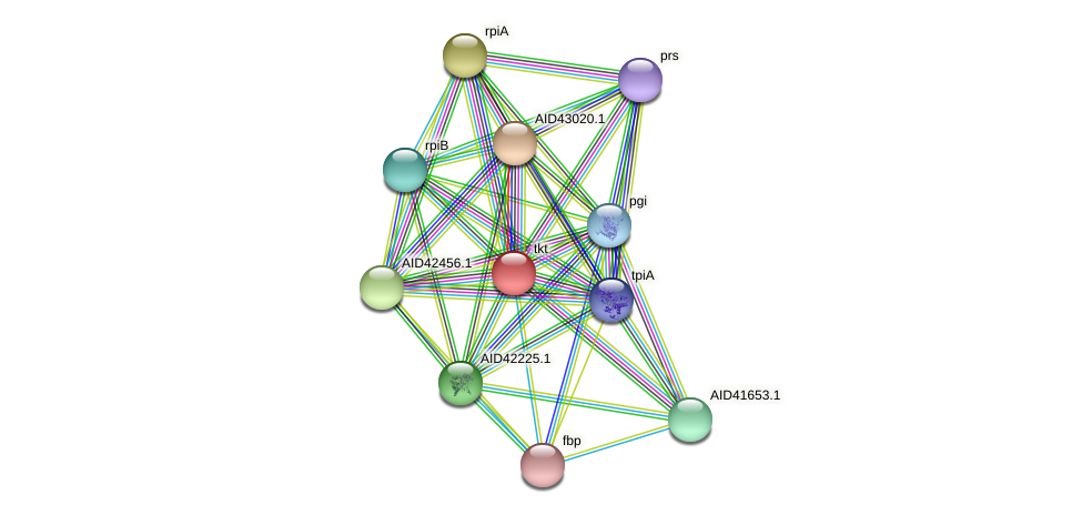 AID42888.1 protein (Staphylococcus xylosus) - STRING interaction network