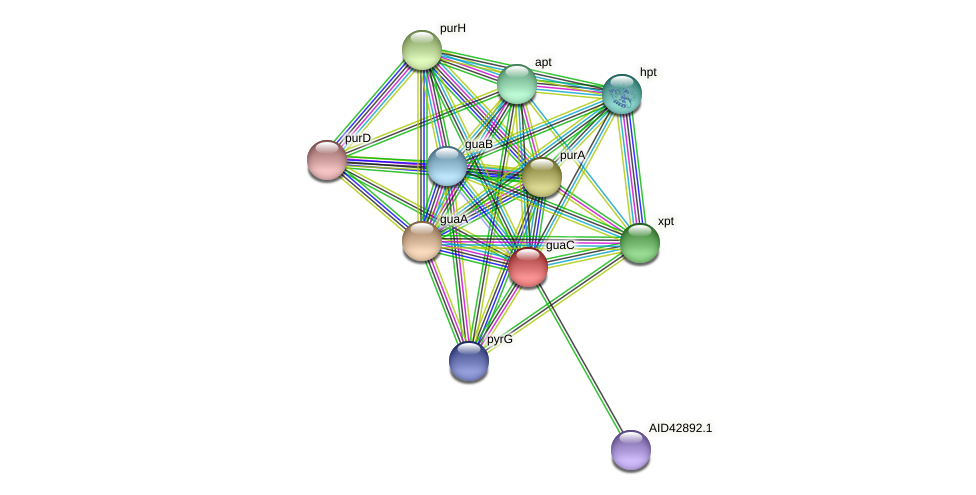guaC protein (Staphylococcus xylosus) - STRING interaction network