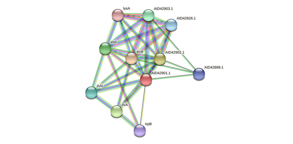 AID42901.1 protein (Staphylococcus xylosus) - STRING interaction network