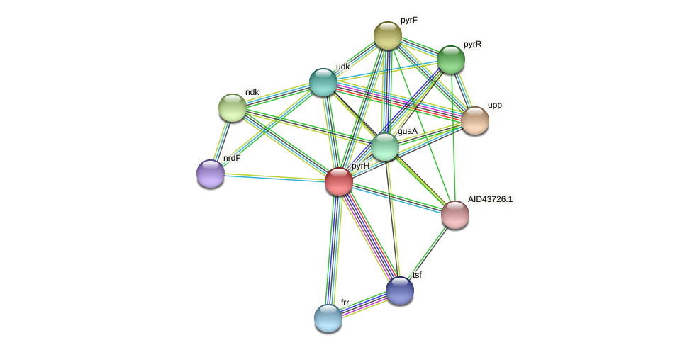 pyrH protein (Staphylococcus xylosus) - STRING interaction network