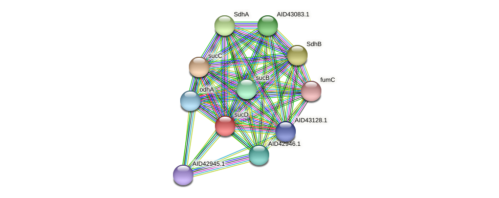sucD protein (Staphylococcus xylosus) - STRING interaction network
