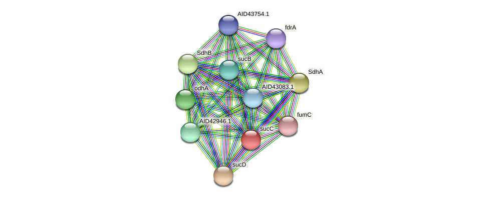 sucC protein (Staphylococcus xylosus) - STRING interaction network