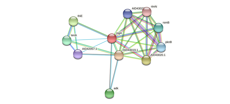 rsgA protein (Staphylococcus xylosus) - STRING interaction network
