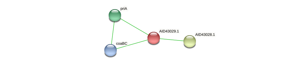 AID43029.1 protein (Staphylococcus xylosus) - STRING interaction network