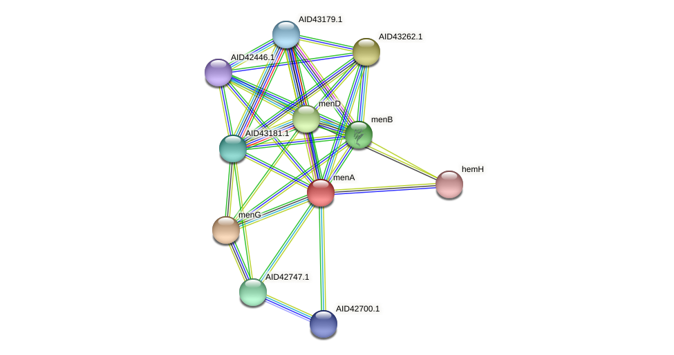 menA protein (Staphylococcus xylosus) - STRING interaction network