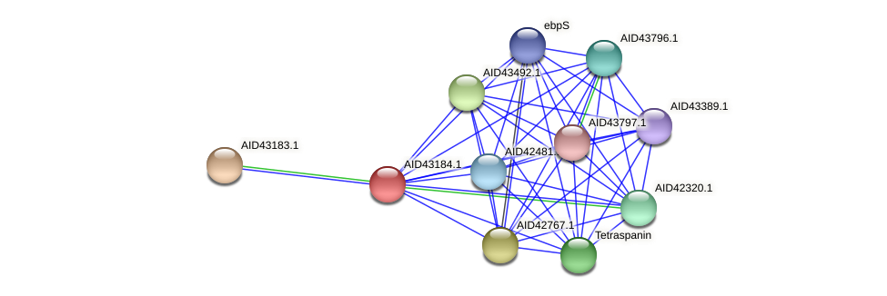 AID43184.1 protein (Staphylococcus xylosus) - STRING interaction network