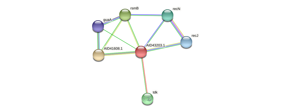 AID43203.1 protein (Staphylococcus xylosus) - STRING interaction network
