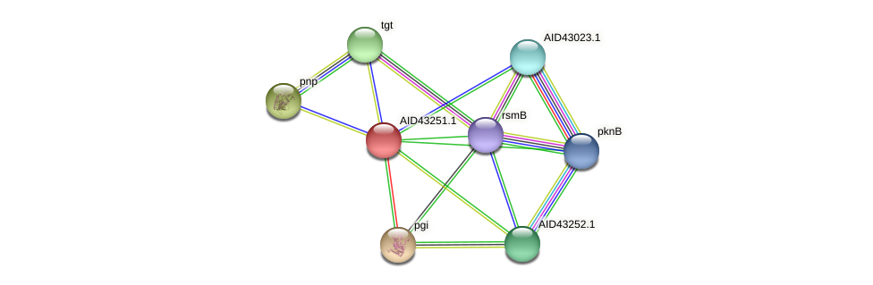 AID43251.1 protein (Staphylococcus xylosus) - STRING interaction network