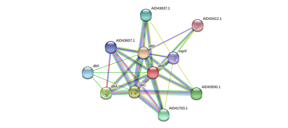 AID43273.1 protein (Staphylococcus xylosus) - STRING interaction network