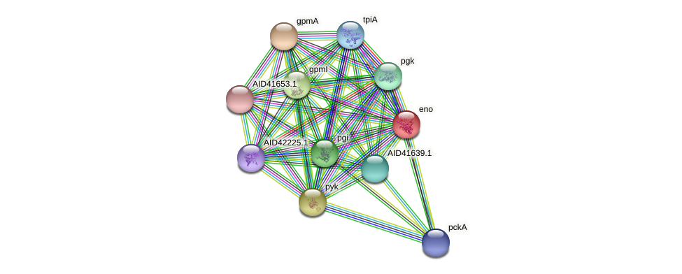 eno protein (Staphylococcus xylosus) - STRING interaction network