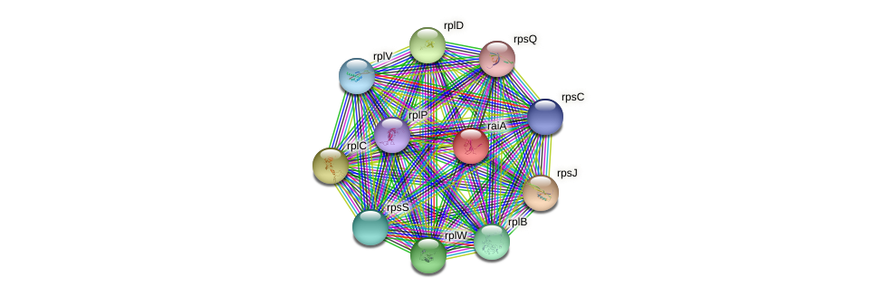 hpf protein (Staphylococcus xylosus) - STRING interaction network