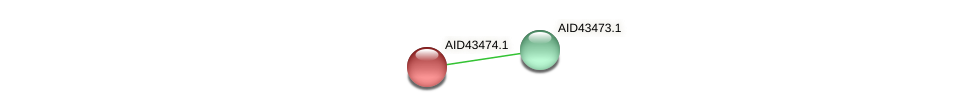 AID43474.1 protein (Staphylococcus xylosus) - STRING interaction network