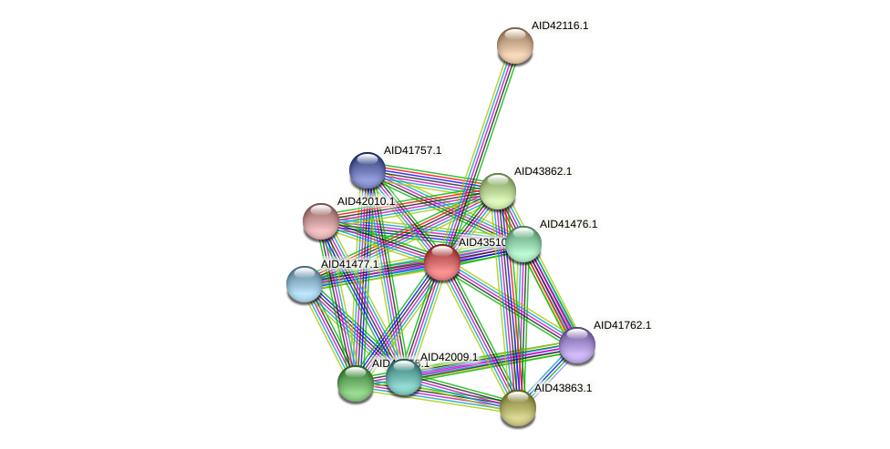 AID43510.1 protein (Staphylococcus xylosus) - STRING interaction network