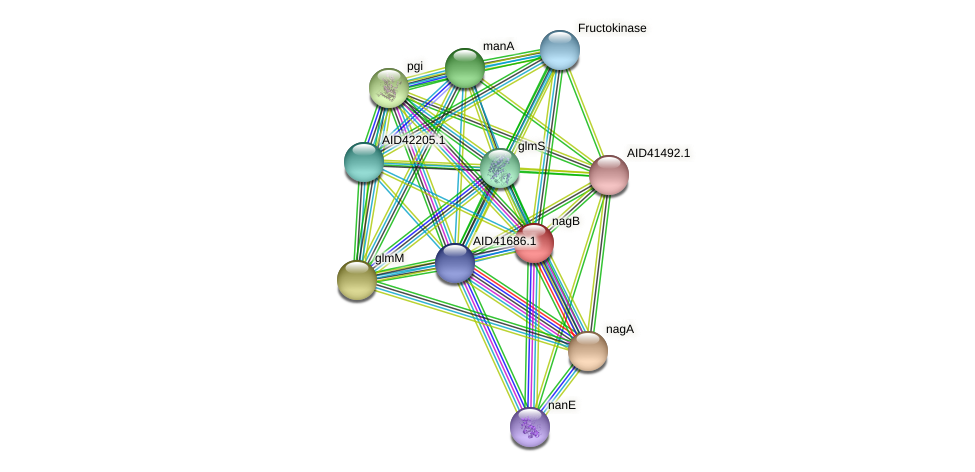 nagB protein (Staphylococcus xylosus) - STRING interaction network